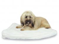 Hunde / Animal - Wasserbett mögl. mit Heizung 80 Watt